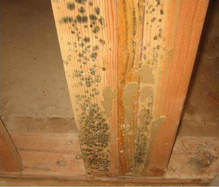 Mold remediation at Pineville Home